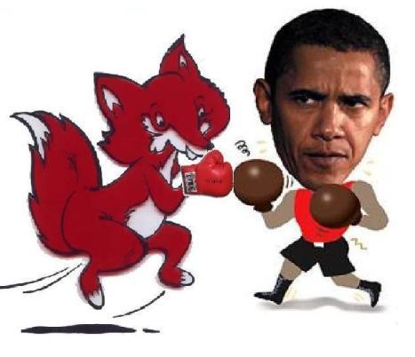 boxing fox
